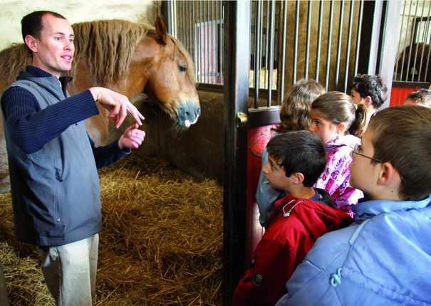 Visite pédagogique cycle 3 au Haras d'Hennebont