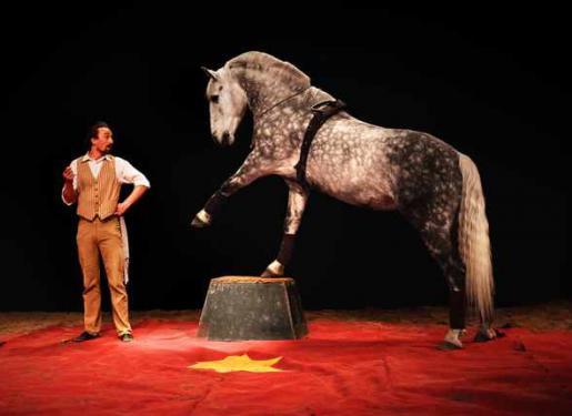 cheval sur scène lors d'un spectacle