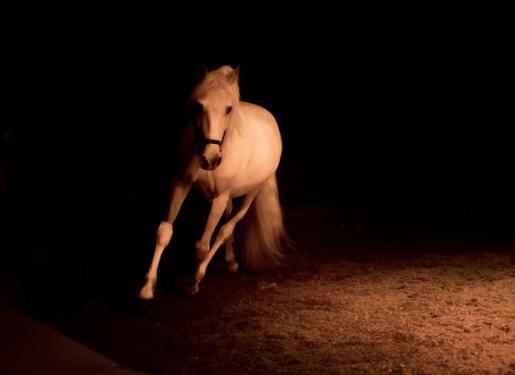 cheval sur piste fond noir