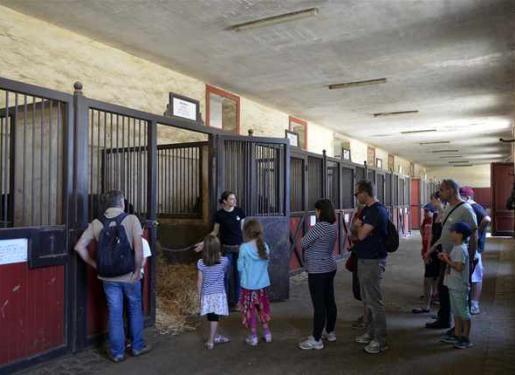 visiteurs dans les écuries du Haras d'Hennebont