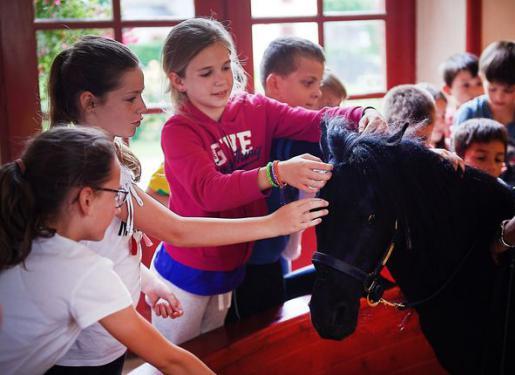 rencontre entre poney et enfants au haras hennebont