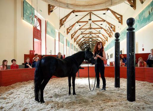 presentation poney cheval au haras hennebont