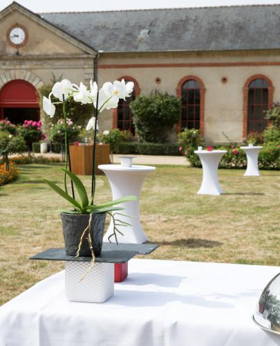 orchidée sur mange debout dans la cour du Haras d'Hennebont
