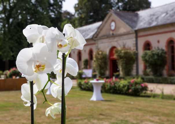 orchidée devant le batiment principal du Haras d'Hennebont