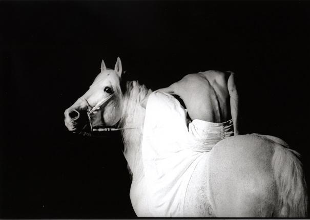 photo centaure