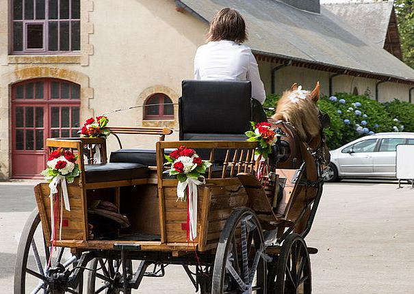 mariage caleche chevaux haras hennebont