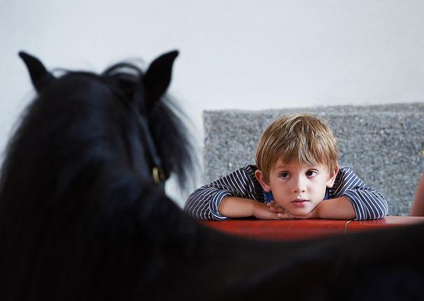 un enfant regarde un cheval au haras hennebont
