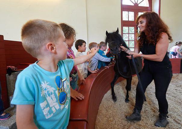une animatrice présente un cheval aux enfants au Haras d'Hennebont