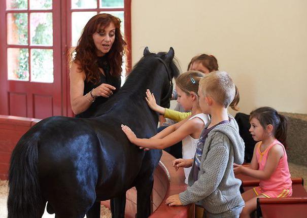 les enfants caressent un poney au haras hennebont