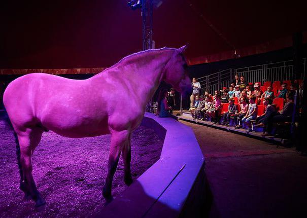 cheval sur la piste devant le public sous lumière rose