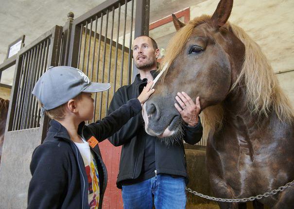 cheval guide et enfant dans écurie au haras hennebont